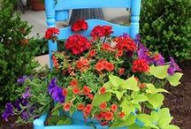 Home - Outdoor Flower Garden / Flowers, Color, Beauty! / by Beverly Austin