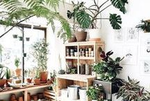 Home jungle / Interiors with plants