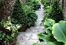 Glorious Garden  / by Cynthia