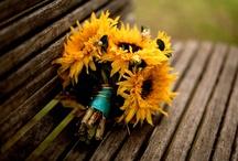 | sunflowers | / by laura dake