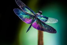 Dragonflies / Dragonflies remind me of hope and grace and loved ones who have passed before me / by Terri Sherman