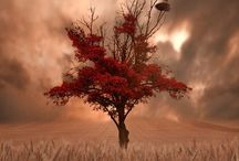 Tree fetish / I have a fascination with trees of all types and stages / by Terri Sherman