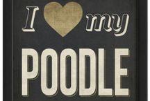 Poodles / by Annie Raines