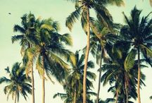 Luxe tropical / by Nik Lawler