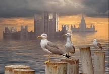 Birds, Birds, Birds !! / by Mary Cox