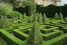 Hedge Mazes / by Tatania Rosa