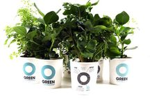 Our Clean Machines / Plants clean the air we breathe and help us live a healthier, more vital life. Meet our Ogreen Clean Machines!