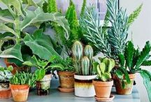 Being green is what we mean / Plant inspiration from all over the world. Because green is the new black