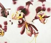 Melissa Halley - Drawings