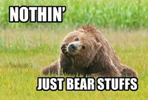 Bear Stuffs / So random.  / by Justina Fenberg