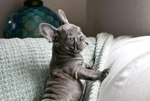 Dogs and Cats / Cute Funny Adorable Dog and Cat Pictures
