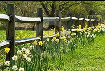 Garden: Fence Me In