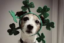 St. Patrick's day for dogs