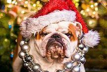 Christmas / Everything and anything to do with Christmas/ Holiday season
