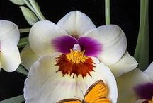 Orchids / by Bernie♥