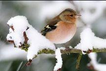 Birds*OtherFeathers / by Bernie♥