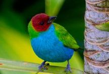Birds, My Little Loves / There are some 9,567 bird species recognized worldwide. North America(from Panama north + Caribbean) has 2,000.   South America has 3,200 species.  Asia has 2,900.      Africa has 2,300 species.  Australia + surrounding islands has 1,700 species of birds. Europe has 1,000 species.  Antarctica has 65 species .  I have not changed the captioning that came with the pictures unless I knew for sure it was wrong.  / by Meg