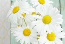 Flores / Flores para decorar y alegrar cualquier rincón