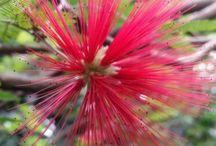 Flora Çiçekler