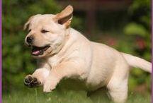 Kleenex® Puppy