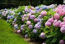 ***\\ my secret garden \\***** / by Saadet Akbudak