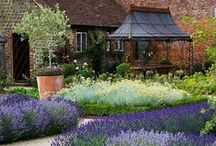 lavender gardens / Beautiful fields and gardens of lavender. Fragrant and colorful.