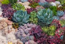 Outdoors / Dreaming of grey fences, an array of succulents & alpines and purple slate. That's my garden goal!