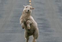 Nydelige dyr :)