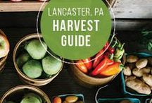 Food & Drink in Lancaster County, PA / Lancaster County is known for it's PA Dutch food, but did you know that we're also one of the top buy fresh, buy local destinations? Whether you're looking to fine dining or casual snack spots, Lancaster has a wide array of delicious restaurants with mouth-watering recipes that will leave your stomach satisfied.
