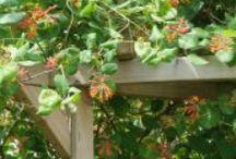 achtertuin / ideeen voor de achtertuin