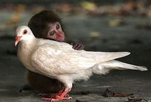 Cute animals / Collection of cuteness