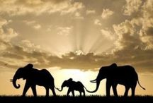 Elephants! / by Michelle Curley