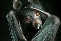 bats / very beneficial little guys / by Ginger Bellant