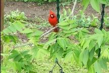 Birds in my backyard / My yard is in Currituck Co. NC / by ::::::Beth Sumerlin O'Briant::::::
