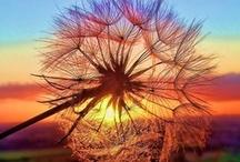 sunset / by Mindy Porter