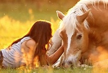 Horses + the Southern Life / by Vanessa Gillette
