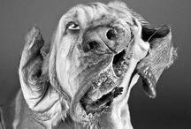OH MY DOG !!!