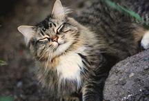 awwww- aka cat love / by Samantha Gibson