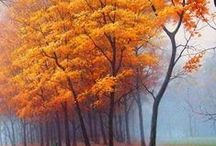 Autumn my favorite time / by Mindy Porter