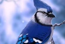 Feathered Friends......... / All things Birds!!