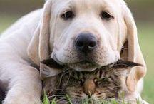 Best of Fur Friends!