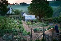 My Future Farm Life / Someday this will be me... / by Samantha Gibson