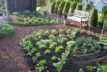 Gardening Ideas / by Lynn Hand