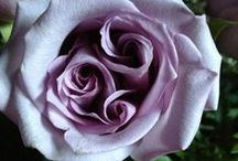 ~Rose~ / ...........yes pleazzzz....... / by Cher