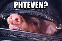 PHTEVEN is PHO FUNNY (Tuna)