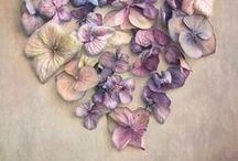 ***Botanical Art*** / pressed, dried, drawn,  painted, embroidered, arranged  ....other / by Cher