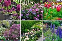 Fleurs / Semées ou plantées, en jardinière comme au #jardin, plantes #vivaces ou #annuelles, les #fleurs s'épanouissent mieux quand on sait quels soins leurs prodiguer.
