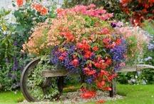 Garden Grandeur' / by Jann Neiers-Squires