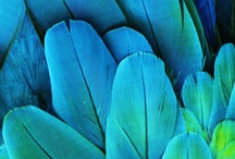 Birds and Feathers / I am always inspired by birds - beautiful colors, graceful forms, and interesting behaviors.