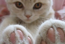 """Your Best Foot Forward / Paws, claws, fuzzy feet, cankles, hairy knuckles, big feet, petite feet, webbed feet, scaley feet, puppy feet, kitty feet...all of them are """"sweet feet"""" that pitter patter to find a home in your heart! I simply adore this board...hope you do too!!!  / by Jane McWilliams Moseley"""